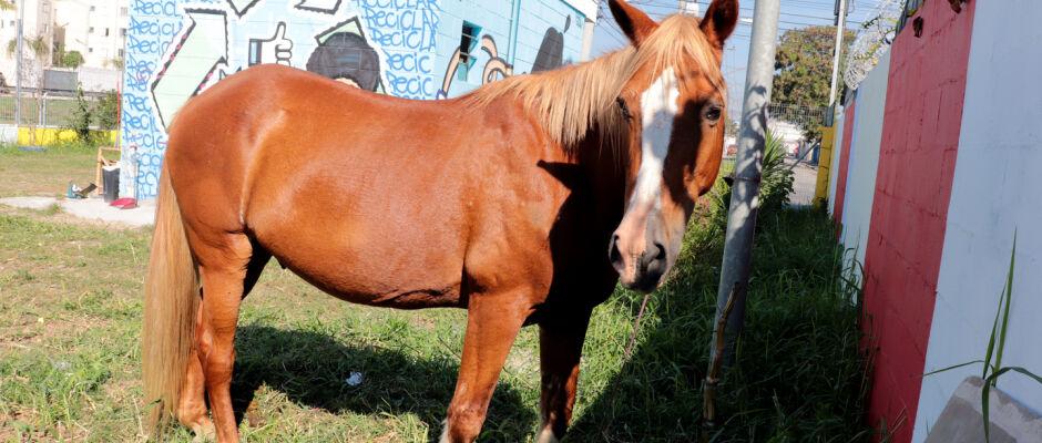 Meio Ambiente resgata cavalo abandonado na Marginal do Una