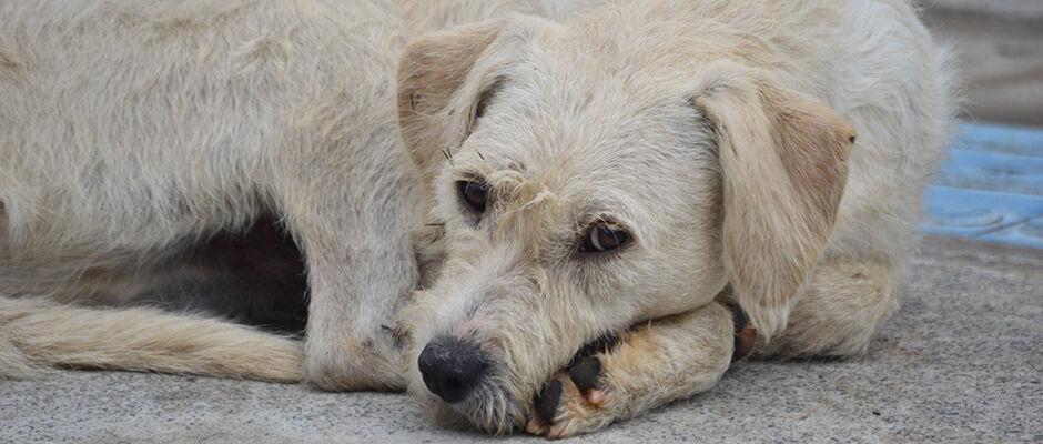 Cidades resgatam 599 animais de rua; 489 são adotados
