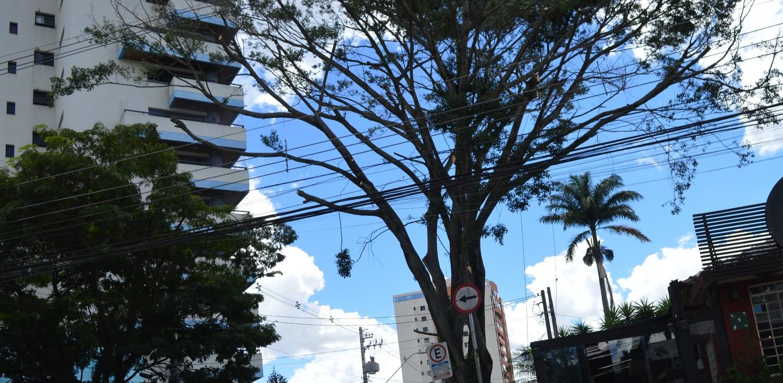 Alto Tietê registra mais de 1,6 mil ocorrências de árvores na rede elétrica
