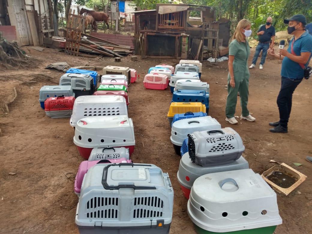 Meio Ambiente auxilia no resgate de animais em Palmeiras