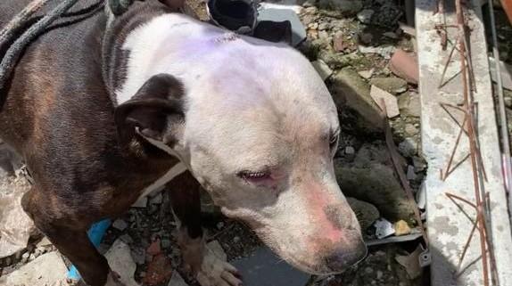 Animais em situação de maus-tratos são resgatados em Itaquá