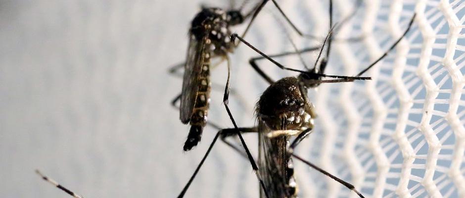 Suzano, de acordo com a Vigilância Epidemiológica, houve nove casos confirmados de pessoas que contraíram dengue de janeiro a abril de 2021